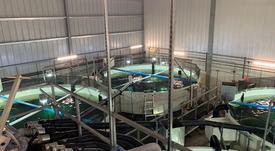 Atlantic Sapphire se asocia para elaborar subproductos de salmón