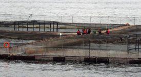 Revelan parámetros exigidos a futuros  certificadores de centros de salmón