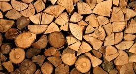 Positivos resultados de ensayos para alimentos acuícolas a base de madera