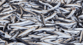 New fish-free challenge issued to feed producers