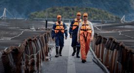 Productor de salmón chileno entre los mejores pagadores a proveedores Pyme