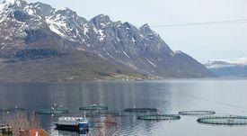 Las tendencias energéticas en la salmonicultura chilena