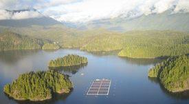 Salmonicultores de Canadá rechazan traslado de centros desde mar a tierra