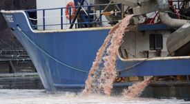 Mowi farm licences suspended after 2.6m salmon die in Canada
