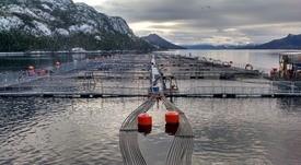Magallanes: Menor demanda hace retroceder exportaciones de salmónidos