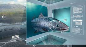 Cermaq desarrollará desde enero concepto de salmonicultura individualizada