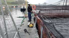 Investigan muerte de buzo en centro salmonicultor de Chiloé