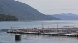 Chiloé: Avanza indagatoria sobre fallecimiento de buzo en centro de cultivo