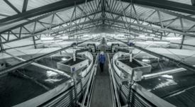 AKVA advierte sobre pérdidas para el cuarto trimestre de 2019