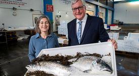 Escocia: Exportaciones de salmón aumentaron 22% en 2019