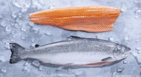 Introducen nuevo salmón con bajo FIFO y altadietamarina