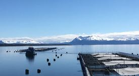 Blumar obtiene certificación para tres centros en Magallanes