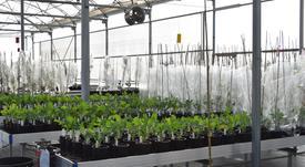 Nuseed establece acuerdo para procesamiento de aceite vegetal rico en Omega 3