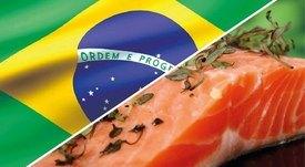 Productores de salmón chileno ven signos de recuperación en Brasil