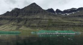 Icelandic salmon farmer bids to fund huge expansion