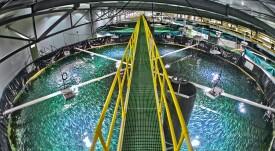 Billund Aquaculture alcanza récord de contratos RAS firmados