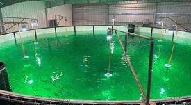 Patagonic RAS BioMar: Avances de dos relevantes proyectos para cultivo de salmón en tierra