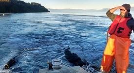 Proponen estudiar impacto de escapes de salmones en Lago Llanquihue