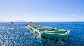 Comienza la puesta en marcha de megaproyecto salmonicultor Havfarm