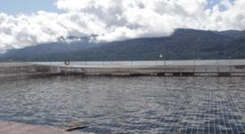 Incrementan fiscalización a entidades que  realizan INFAS en centros de salmón