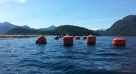 SMA detalla cargo grave por sobreproducción en centro de Mowi Chile