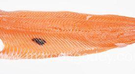 Caracterizan melanosis focal en salmón Atlántico