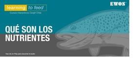 Cargill Chile lanza nueva plataforma de e-learning sobre nutrición de peces