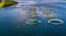 Academia Acuícola: lanzan programa Corfo en apoyo a micro y pequeñas empresas acuícolas