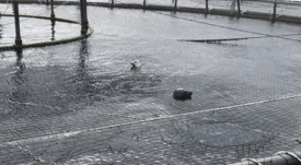 Disarmed salmon farmers call for compensation for seal attacks
