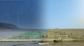 Expertos analizan las amenazas y riesgos del cambio climático en la salmonicultura