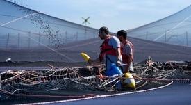 Ingresos de Salmones Austral impactados por liquidación de salmón coho
