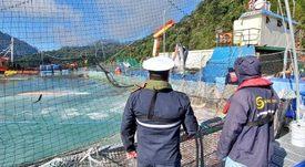 Salmones Camanchaca eleva a 1,3 millones mortalidad de peces por FAN