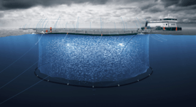 Grieg gears up to put first smolts in NL farms