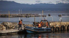 Las lecciones ambientales que dejó el 2020 para la salmonicultura chilena