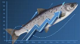 Productores de salmón chileno prevén año de ganancias dejando atrás la tormenta