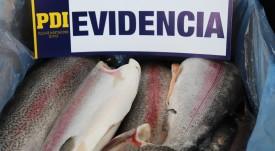 PDI desarticula organización que robaba mortalidad de salmones