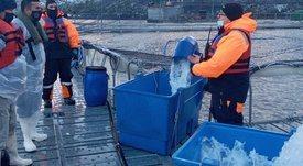 Autoridad Marítima fiscaliza centros de salmón en sector de Isla Capitán Aracena