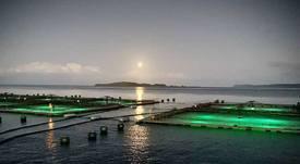 Proveedor acuícola chileno celebra aniversario con sólida presencia internacional