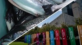 El camino de la salmonicultura hacia el cumplimiento de los ODS/ONU
