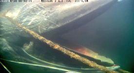 Juzgado sobresee causa por ballena muerta en centro de cultivo