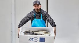 Cod farmer stocks next year's fish as it nears first commercial harvest