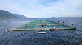 Nutreco invierte en compañía que ayudará a reducir uso de antibióticos en acuicultura