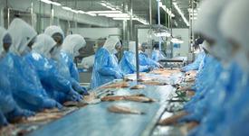 Trasladan a Santiago a trabajador por grave accidente en planta de Salmones Austral