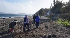 Los planes de Mowi, AquaChile, Cermaq y Salmones Aysén para playas sumidero