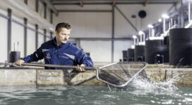 Kingfish Co loses €3.5m despite higher gross profit