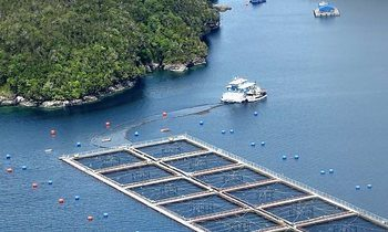 Algae fish death toll tops 4,000 tonnes in Chile