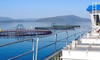 Akva Group: Krevende kvartal for det sjøbaserte - har tapt mange titalls millioner på dataangrepet