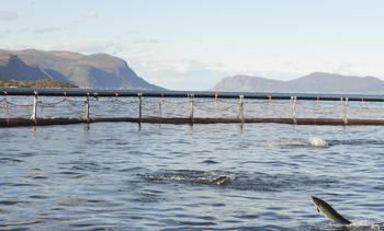Ny rapport om teknologiutvikling i havbruksnæringen