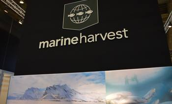 Marine Harvest misses Q1 volume target