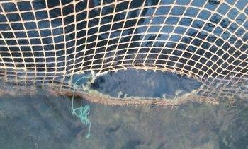 20 000 laks og 1300 leppefisk på rømmen